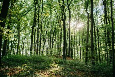 Woodland elopement and wedding ceremony location in Germany
