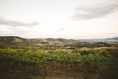 Get married in an Italian vineyard